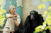 Jane Goodall and a chimp
